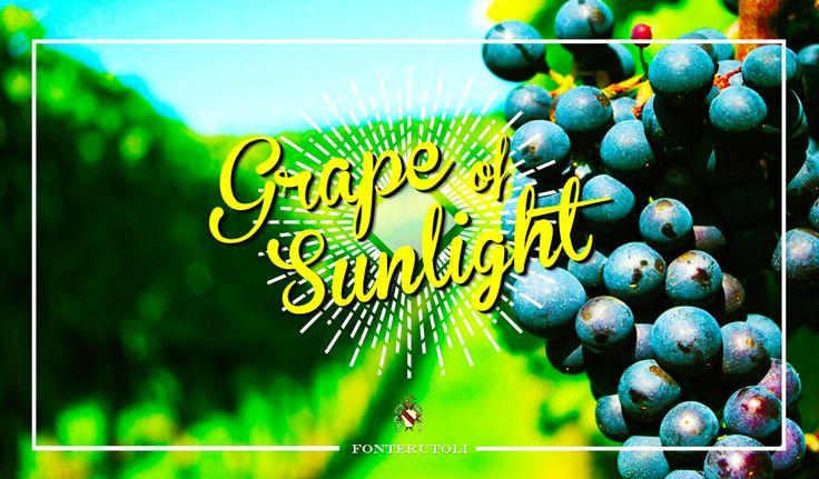 "Grains of Sunglight - ""Summer get better with a glass of wine"". @marchesimazzei  #marchesimazzei #fonterutoli  #wine #tuscany #winestyle #winetasting #winelovers"