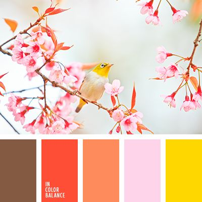 алый, бледно-розовый, желтый, канареечно желтый цвет, коричневый, красный, лиловый цвет, морковный, морковный цвет, оранжевый, подбор цвета, розовый, цветовое решение для дизайнеров, шоколадный, яркий желтый.