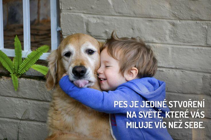 Máme rádi psy | Psi, Pejsci, Štěňátka, Hafíci a Mazlíčci na jednom místě!