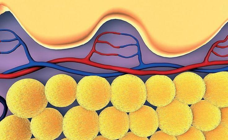 Как быстро и эффективно избавиться от висцерального жира? Отличия подкожного и висцерального жиров? Методы устранения лишнего жира. Разбираемся с estet-portal.com