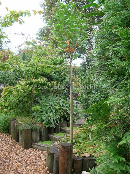Træer til små haver - ideer fra Byhaven i Ebeltoft