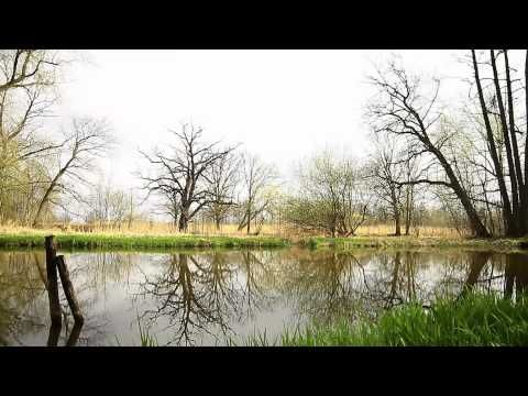 Your Nature Sounds - Birds and water - YouTube