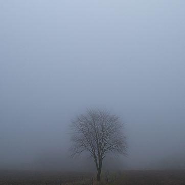 træ ved Gl RY