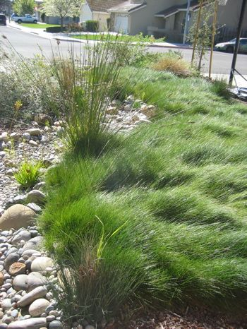 bio-swale functional dry creek bed where storm water can go without causing a problem