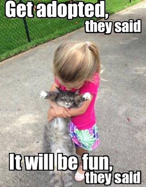Get adopted they said... #kids #cat #meme #funny #mom #lol #jumblzar