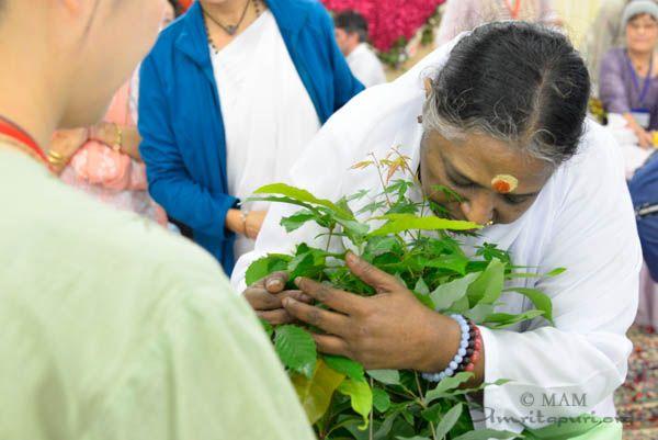 Amma blessing saplings, Japan