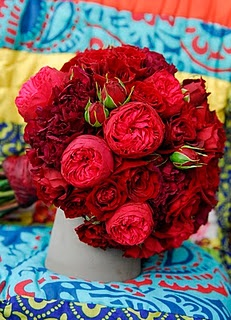 red piano roses are lovely and almost have the look of a peony