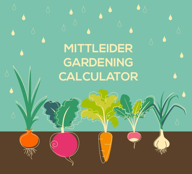 mittleider gardening calculator spreadsheet. Add your ALDF and it will tell you when to plant indoors, outdoors, how many plants you'll need, and expected yeild with the Mittleider Gardening Method.