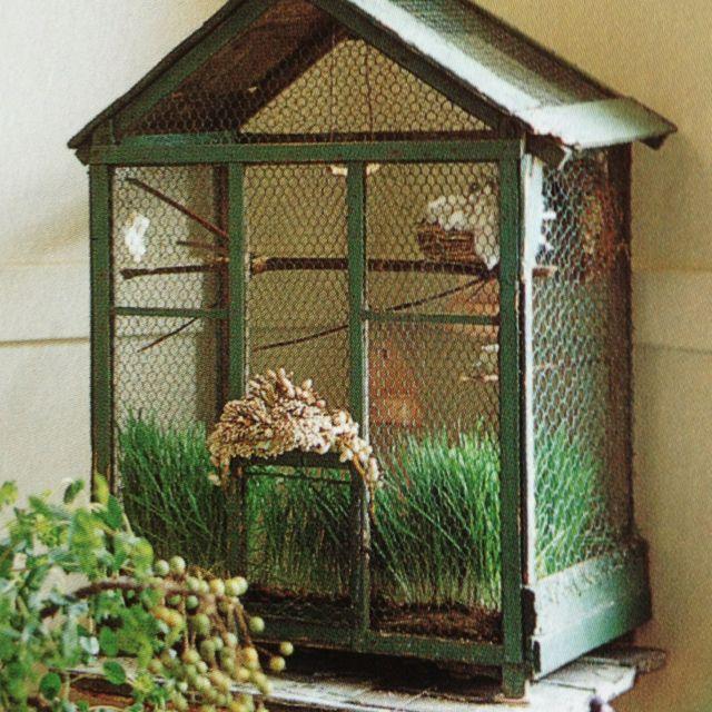 quail!  GROWING SEED!