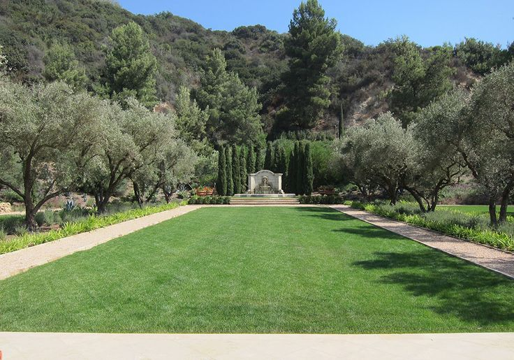 23 best Olive Trees images on Pinterest | Art museum, Contemporary ...