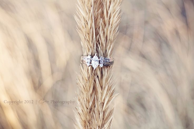 engagement ring in a wheat field!! how adorable!!!