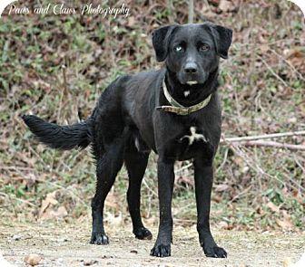 Munford, TN - Terrier (Unknown Type, Medium). Meet C8- Camo, a dog for adoption. http://www.adoptapet.com/pet/12490243-munford-tennessee-terrier-unknown-type-medium