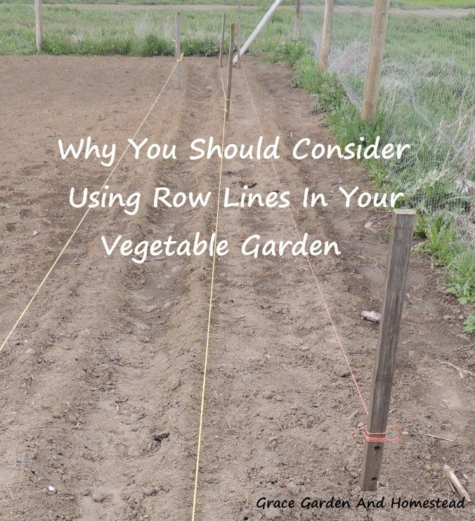 Reasons to put garden lines in your garden. This just made things so much easier!