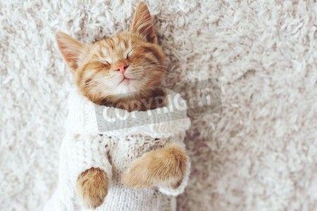 白いカーペットの上に暖かいニットのセーターを着ているかわいい小さな生姜子猫が眠っています。