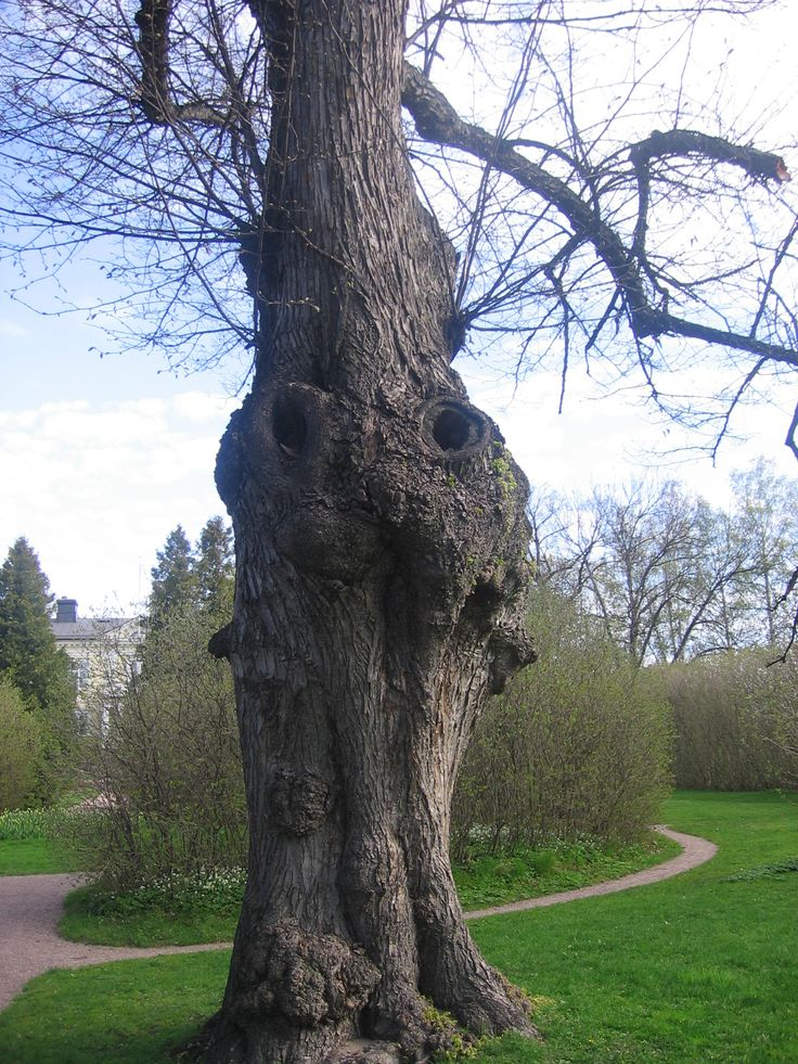 Rabbit tree.