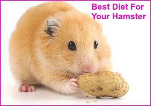 Diy Healthy Hamster Food