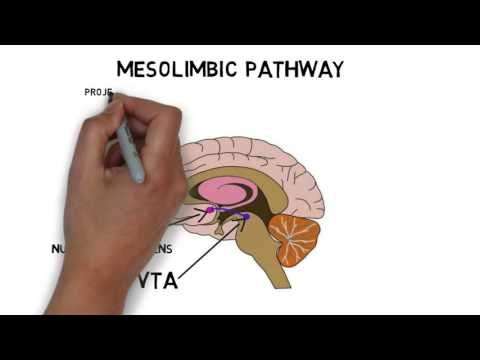 2-Minute Neuroscience: Ventral Tegmental Area — Neuroscientifically Challenged