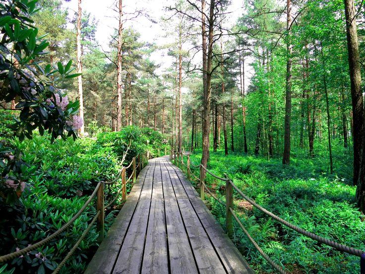 Haagan Alppiruusupuisto (park) - Helsinki, Finland