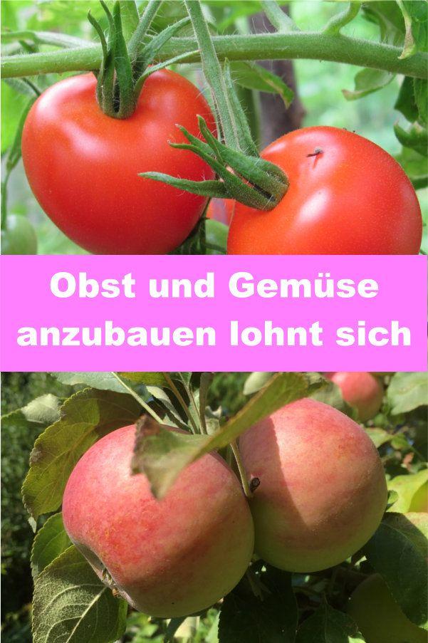 Obst Und Gemuse Aus Dem Eigenen Garten Gartenbob De Der Garten Ratgeber Obst Und Gemuse Gemuse Anbauen Obst