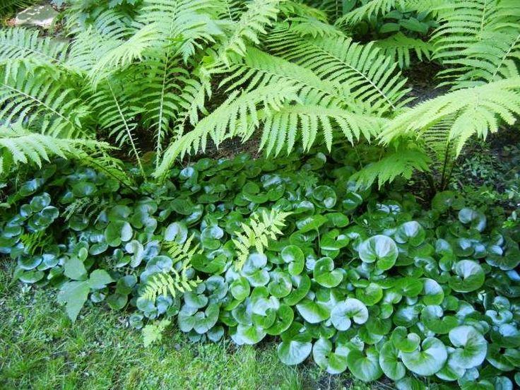Die 25 besten ideen zu schattengarten auf pinterest - Schattengarten gestalten ...