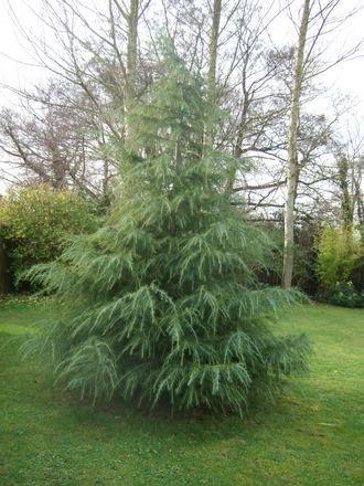 unique small evergreen trees