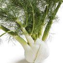 El Hinojo es rico en antioxidantes, reduce el colesterol, ayuda a nuestro hígado y combate la anemia ecoagricultor.com