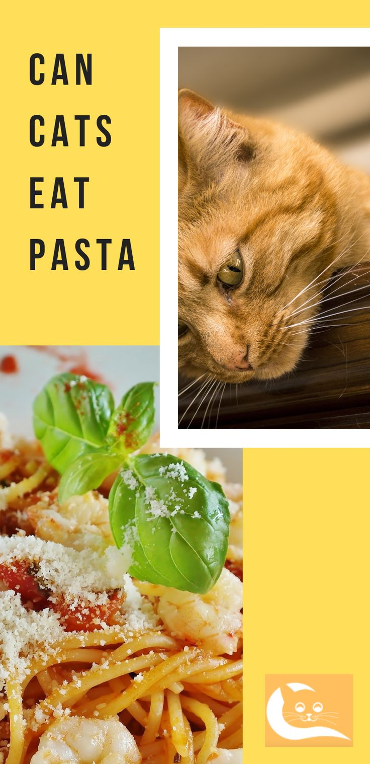 Can Cats Eat Pasta If you ask me, pasta, pizza and lasagna