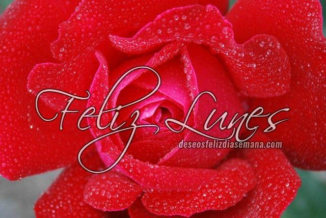 Centro Cristiano para la Familia:   Con esta hermosa rosa te deseo un Feliz Lunes, q...