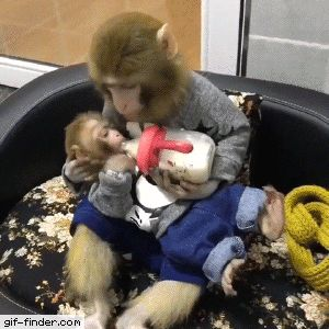 Best 25+ A monkey ideas on Pinterest | Adopt a monkey, Monkey ...