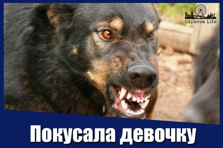 За покусанную во дворе школы девочку саратовчанка с собакой заплатит 20 тысяч рублей  Собака гуляла без намордника и без хозяйки. За халатный присмотр за собакой с трагическими последствиями женщина заплатит компенсацию за моральный вред в размере 20 тысяч рублей.  https://news.yandex.ru/yandsearch?cl4url=saratov.mk.ru%2Farticles%2F2017%2F03%2F06%2Fza-pokusannuyu-devochku-saratovchanka-s-sobakoy-zaplatit-20-tysyach-rubley.html&lr=213&rpt=story #Саратов #СаратовLife