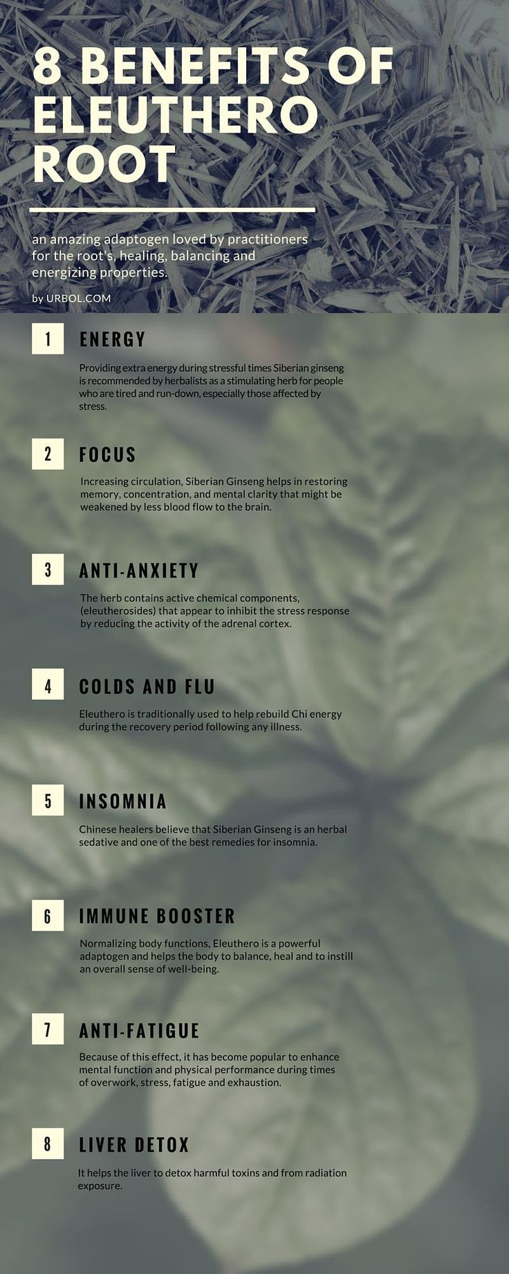 Eleuthero Root Infographic Energy Focus Anti-Anxiety Anti-Fatigue Chronic Fatigue Syndrome Common Colds Immune Booster Liver Detox Cancer Antiviral High Blood Pressure Insomnia Bronchitis #LiverDetoxCancer #insomniainfographic