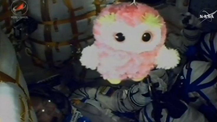 Stuffed animals in space: An appreciation