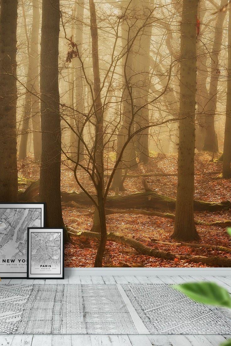 90 best forest wall murals images on pinterest photo wallpaper autumn woods wall mural wallpaper amipublicfo Images