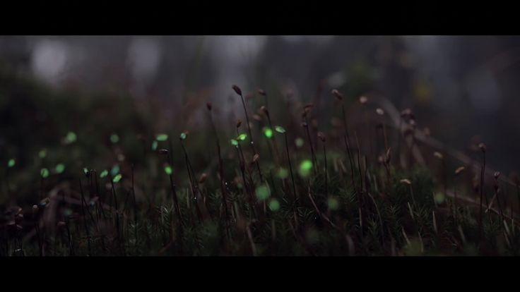 Bioluminescent Forest, l'anima romantica del videomapping. Magie luminesenti fra i boschi