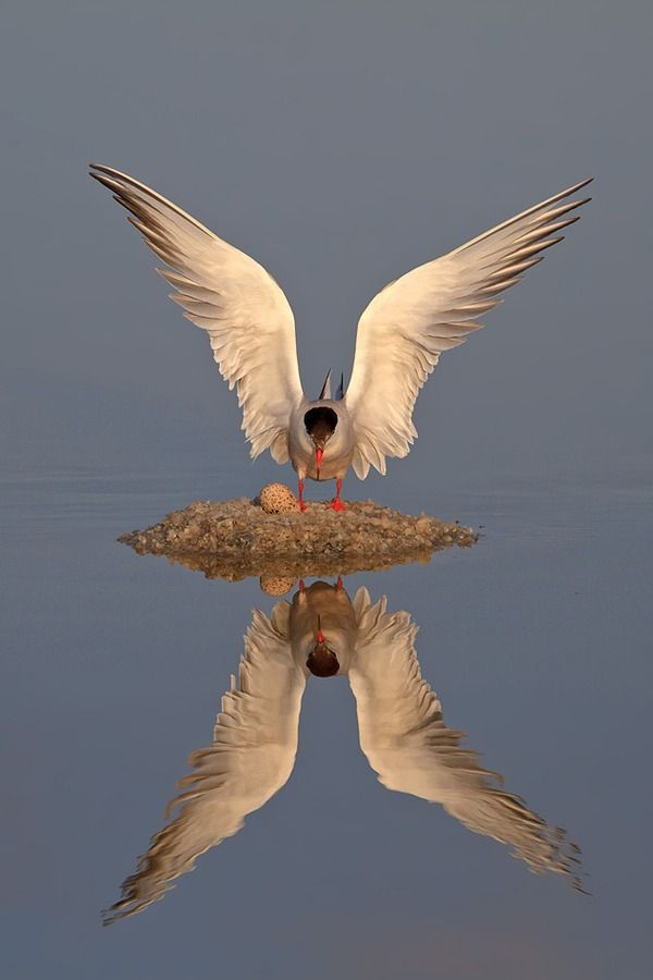 Reflection -- An amazing photograph.