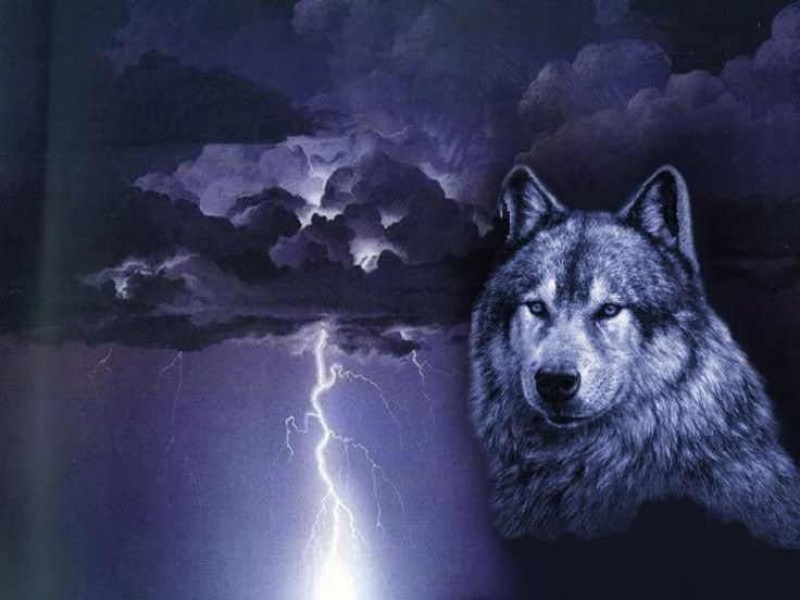 wolves and lightning wallpapers - photo #2