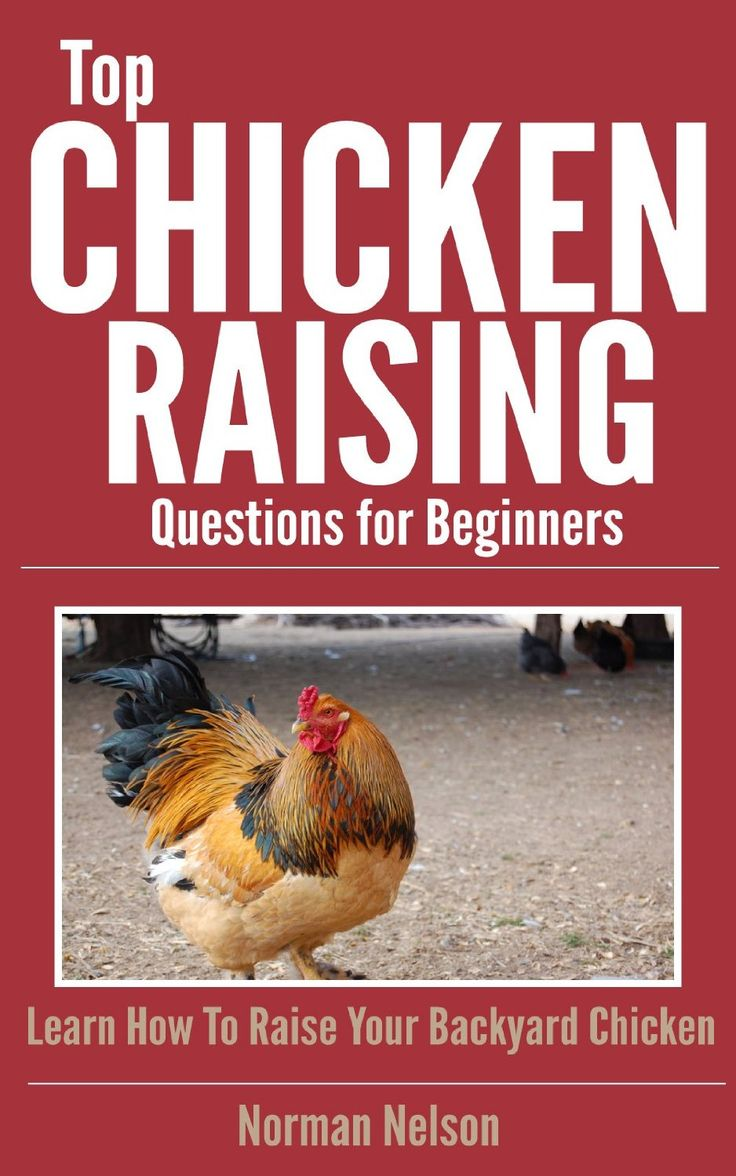 14 best images about raising chickens for eggs on