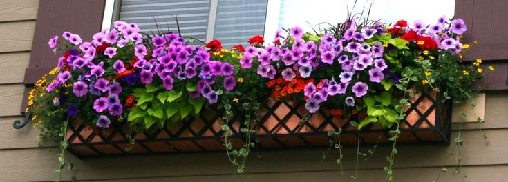 Window Box Contest Entry Summer Spectacular!