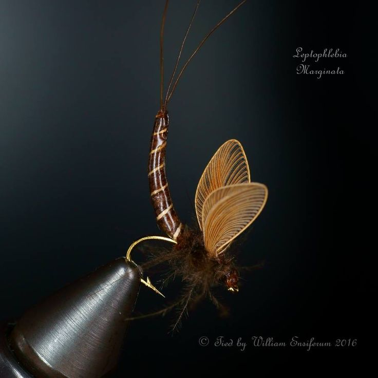 Leptophlebia Marginata #12 is ready like emoticon. with extended body and origami wings.  By William Ensiferum