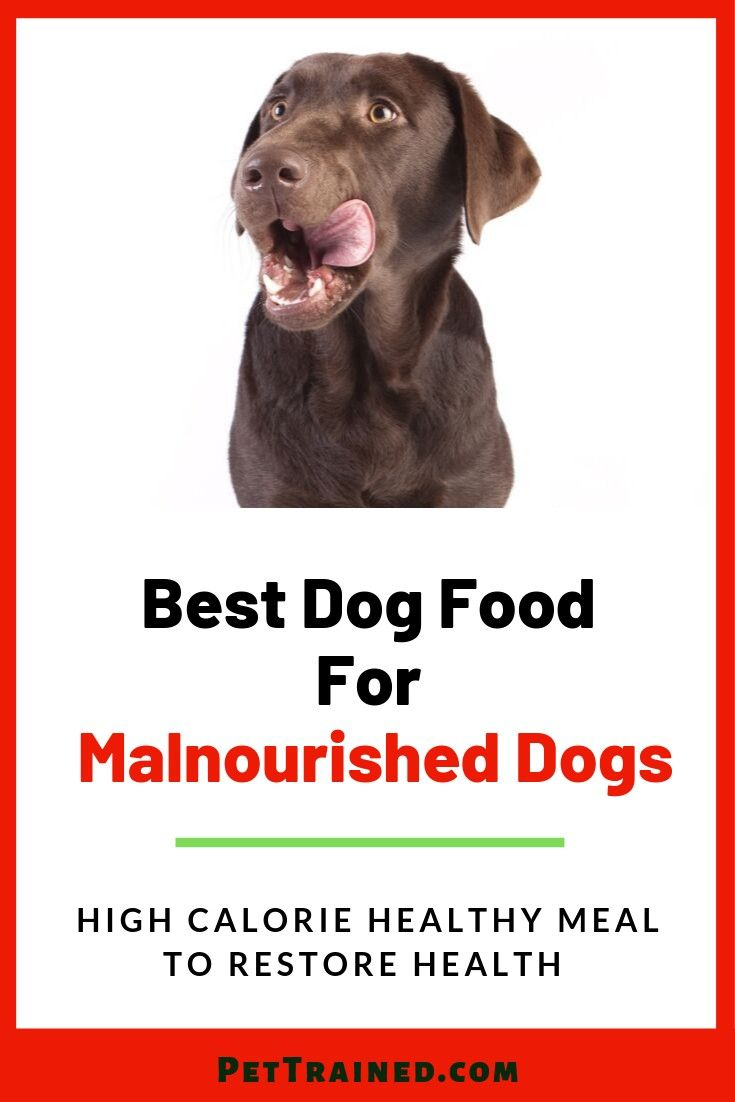 Are You Looking To Help Your Dog Gain Weight Become Healthier And