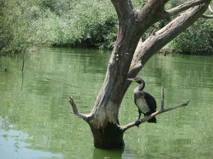 Kerkini lake Macedonia Greece