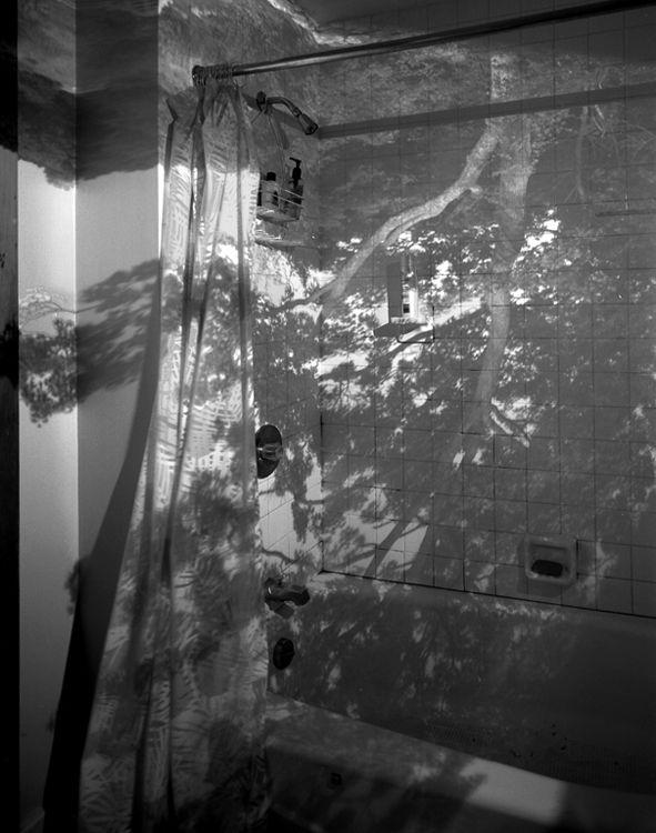 Camera Obscura Image of a Tree in Bathroom, 1999 abelardo morell