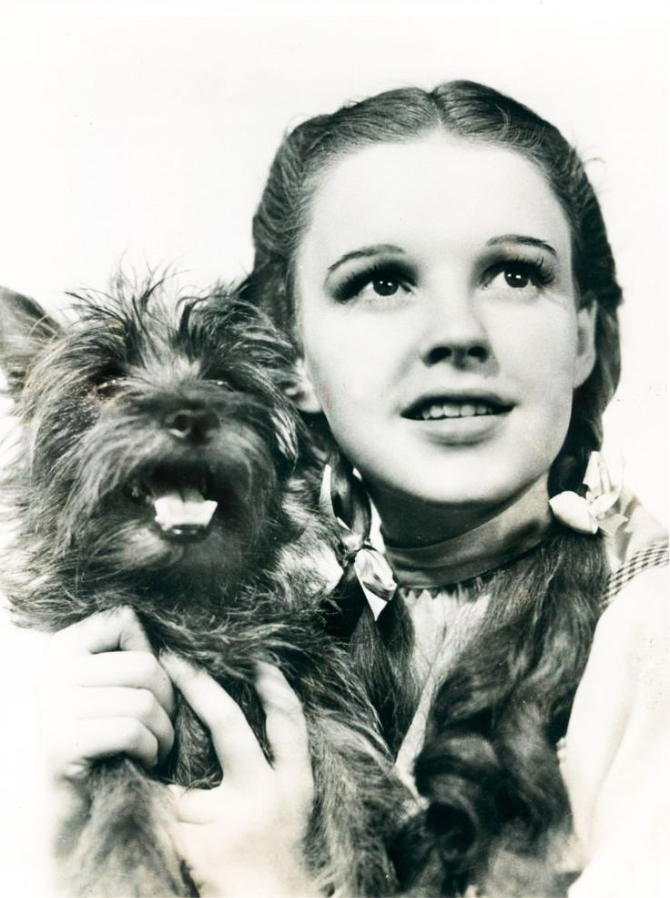"""""""I've always taken 'The Wizard of Oz' very seriously, you know. I believe in the idea of the rainbow. And I've spent my entire life trying to get over it. """"  — Judy Garland"""