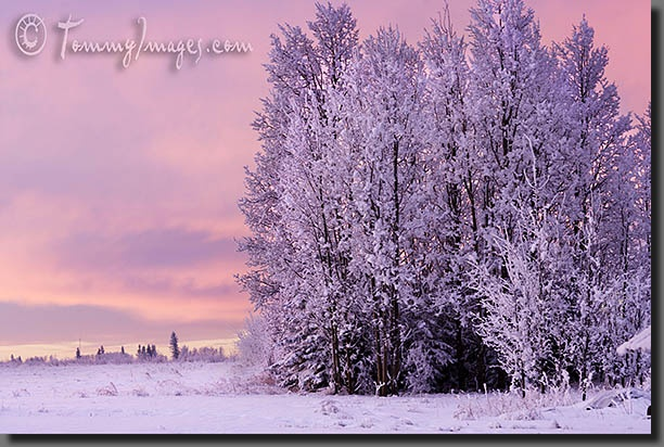 Google Image Result for http://tommyimages.com/Stock_Photos/North_America/Canada/Countryside/slides/Canada_0196-Frozen_Icy_Landscape.jpg