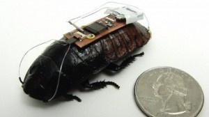 Inventato il modo per telecomandare gli scarafaggi