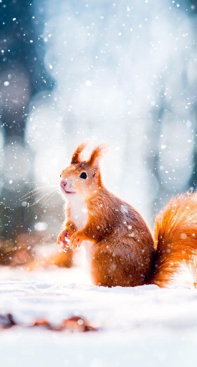 Pin Ot Polzovatelya Flora James Na Doske Beautiful Animals And Pets Kartiny Zhivotnyh Zhivotnye Kartiny
