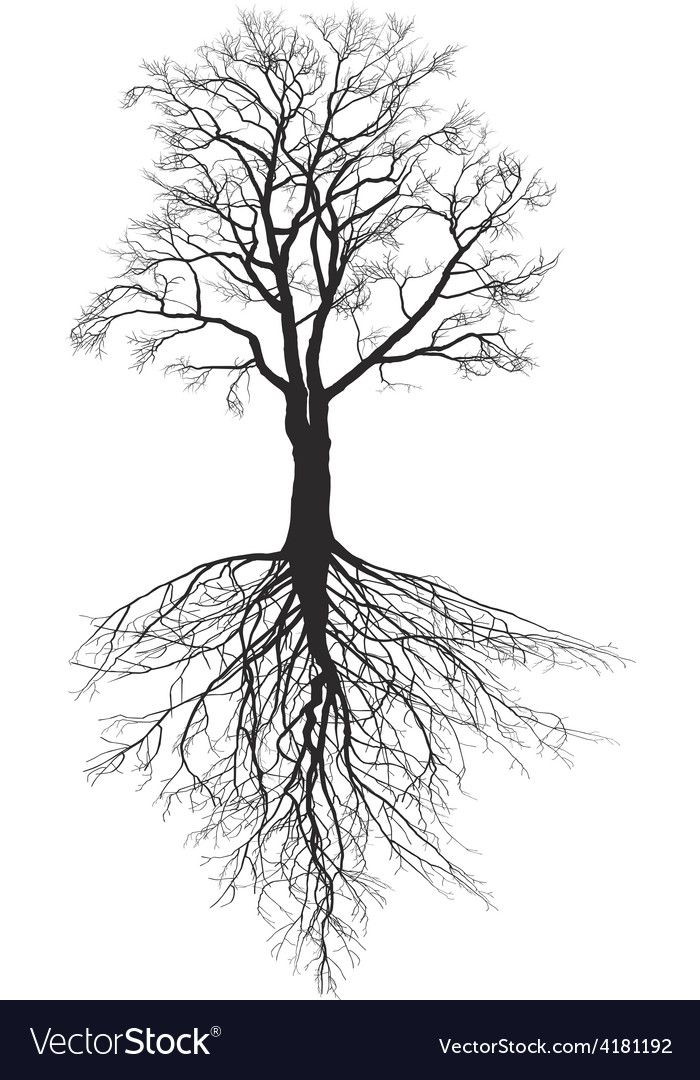 Walnut Tree With Roots Royalty Free Vector Image Roots Illustration Tree Roots Tattoo Roots Drawing