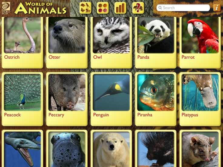 Backyard Science Abc Part - 44: 3 Great Animal Apps For Science. Abc Mouse Zoo Set World Booku0027s World Of  Animals.