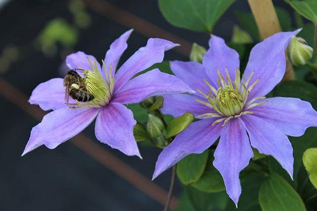 39 best Blumen images on Pinterest