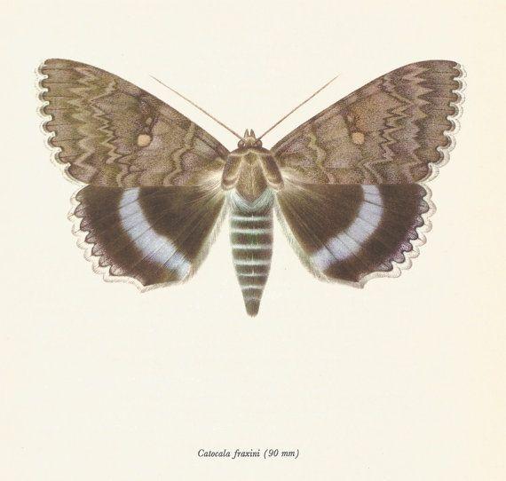P Moth Decorator 90 best Vintage Butter...